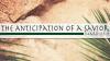 Palm Sunday: The Anticipation of a Savior